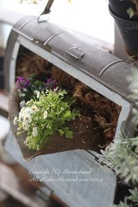春のお花いろいろ ベランダガーデニング★ - フレンチシックな家作り。Le petit chateau