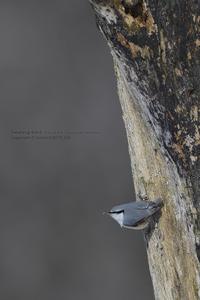 春の雪原から、、、 - healing-bird
