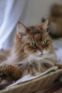 my cats - おまけ猫たちとの日常