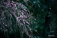 ☆ 春を待つ ☆ - Trimming