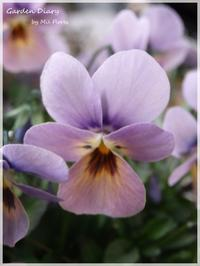 Maria - Garden Diary