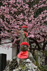 早春の伊豆 3 - フォト・フレーム  - 四季折々 -