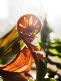 ブレクナム・ブラジリエンセ #2 - Blog: Living Tropically