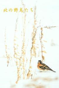 アトリ - 北の野鳥たち