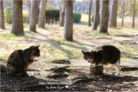 懐かしのサビ猫さん - 4にゃん日記+