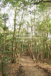 3月のひとり山歩き ~朝日浴びて - すずめtoめばるtoナマケモノ