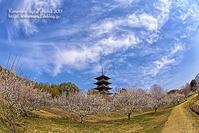 備中国分寺の梅 - 気ままな Digital PhotoⅡ