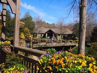 水仙を見に出かける。- Gibbs Garden - アメリカ南部の風にふかれて