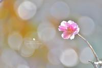 雪 - お花びより
