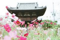 般若寺 - photomo