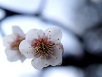 春よ~ 遠き春よ~ ♪ - 気まぐれ日記 思いつくままに・・・