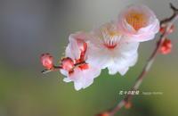 又・・冬や、さむ~ - 花々の記憶