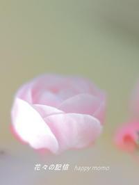 梅美人の春 - 花々の記憶