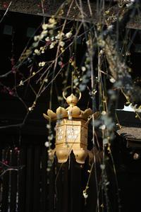 #DP3M 観梅 #京都 - 関西ウォーカー自遊人 Trial