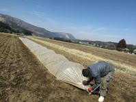 種まき 2017 - 南阿蘇 手づくり農園 菜の風