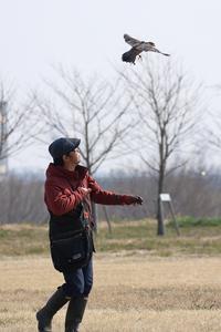 日本各地からファルコナー(鷹匠)が集まり、日頃の訓練の成果を披露する珍しいお祭り(千葉県野田市) - 旅プラスの日記