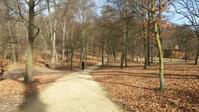 森を散歩 - 毎日ベルリン!