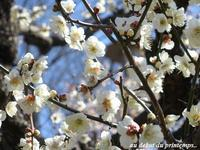 穏やかな春の訪れ、運んでくれた花・・・☆ - 花が教えてくれたこと