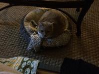 忍び寄る猫、リリーさん - ちょっと田舎暮しCalifornia