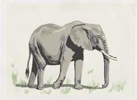 ウ・ミンイー連作短編集「歩道橋の魔術師」より第4話『ギラギラと太陽が照りつける道に象がいた』」感想 byマサコ - 海峡web版