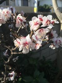 啓蟄、春はもうすぐです - 家族のことと庭のこと。
