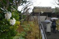 地味な高尾山ショート その3 - 季節(いま)を求めて