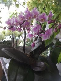 簡単リフレッシュ!花屋流☆元気が出ないときのリフレッシュ方法。 - ルーシュの花仕事