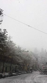 /// 少し後戻りの春の雪 /// - 朝野家スタッフのblog