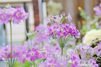 狭い庭も春らしくなってきました~(^^♪ - 自然のキャンバス