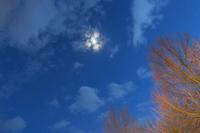 紫キャベツにご用心 - ペルージャ イタリア語・日本語教師 なおこのブログ - Fotoblog da Perugia