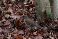 3月の写真クラブの撮影会 ~久しぶりに鳥を愛でる~ - 日々の贈り物(私の宇都宮生活)