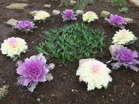 春の予感~マンション花壇から - ニッキーののんびり気まま暮らし