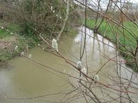 洪水の季節とマレのエコガーディアン - フランス Bons vivants idees d'aujourd'hui