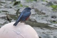 大漁祭り! - 野鳥写真日記 自分用アーカイブズ