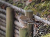 『木曽川水園の鳥達・・・♪』 - 自然風の自然風だより