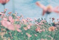 明石海峡公園 - photomo