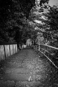 長い長い階段を登って後ろをみてごらん -   Okimu