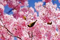 春ですね - 気ままに写生活