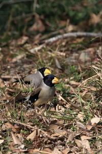 コイカル - 野鳥公園