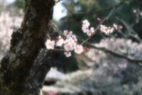 早春の北鎌倉・・・東慶寺 - aya's photo