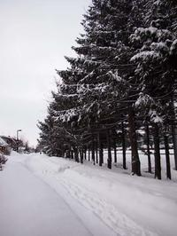 3月7日 今日の写真 - ainosatoブログ02