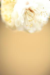 北野天満宮の梅 その7 - 春の風