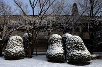 3月雪の日 #04 - Yoshi-A の写真の楽しみ