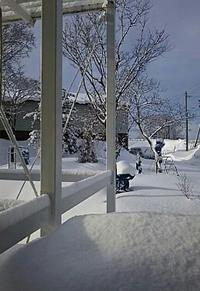 3月の雪 - ちゃたろうと気まま日記