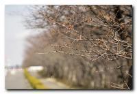 桜前線。 - 気まぐれフォト