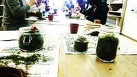 苔のテラリウム レッスン🎵 - ハルレロゆるゆるゆらり日記