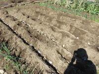 ジャガイモの植え付け - 光さんの日常