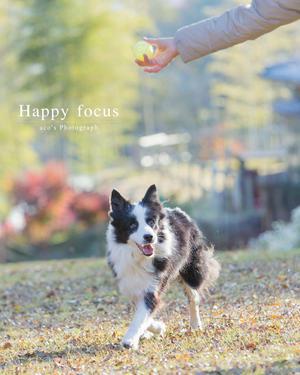 『愛情溢れる愛犬の撮り方』講座のご案内 - シュガーとカメラと。etc...