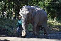 シュリーさんのトレーニング - 今日ものんびり動物園