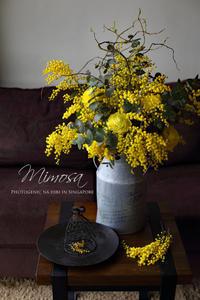 FLOWER #32 ミモザのシャンペトルBOUQUET&お花のアトリエ - フォトジェニックな日々